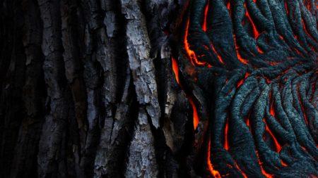 abstract-art-bark-983200-jpg